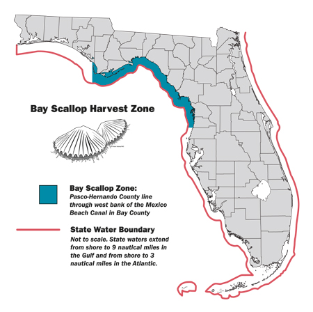 Bay Scallop Season