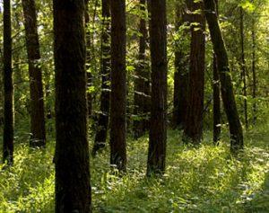 woods_2013
