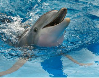 dolphin_tale_2013