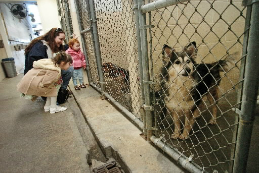 Miami County Animal Shelter Dogs For Adoption
