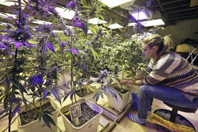 Cheyenne Fox, an employee and daughter of the owner of a Denver marijuana store