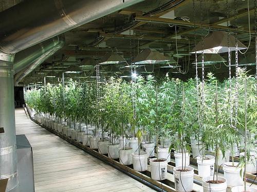 weed-grow