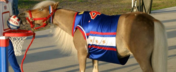 Amos the wonder horse