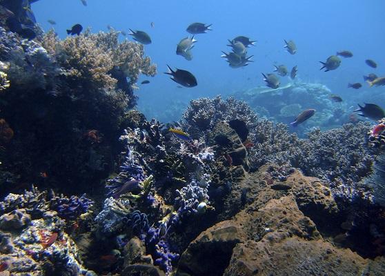 Tampa And Havana Aquariums Team Up Newstalk Florida