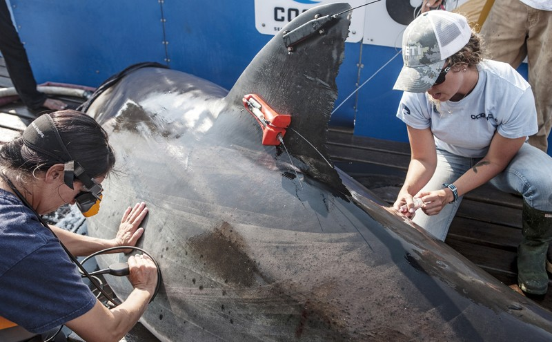Sharks On Sharks Crime Could Be The Reason For The Dead